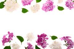 与淡紫色在与拷贝空间的白色背景隔绝的花和叶子的框架您的文本的 平的位置 顶视图 免版税图库摄影