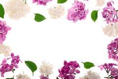 与淡紫色在与拷贝空间的白色背景隔绝的花和叶子的框架您的文本的 平的位置 顶视图 图库摄影