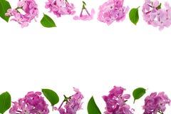 与淡紫色在与拷贝空间的白色背景隔绝的花和叶子的框架您的文本的 平的位置 顶视图 免版税库存照片