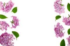 与淡紫色在与拷贝空间的白色背景隔绝的花和叶子的框架您的文本的 平的位置 顶视图 库存照片