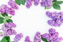 与淡紫色花和叶子的花卉框架构成在白色背景 平的位置,顶视图 花束弓形象花纹花样无缝小 库存照片