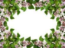 与淡紫色花和叶子的花卉框架 免版税库存照片
