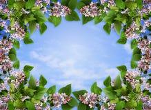 与淡紫色花和叶子的花卉框架 图库摄影