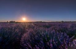 与淡紫色领域的日落晚上在Valensole,普罗旺斯,法国 免版税库存照片