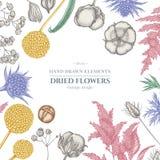 与淡色落新妇属植物的花卉设计,craspedia,蓝色刺芹,lagurus,棉花,麦 库存例证