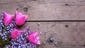 与淡紫色和桃红色郁金香的背景在葡萄酒woode开花 免版税库存图片