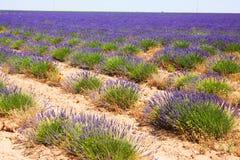 与淡紫色植物的风景  免版税库存图片