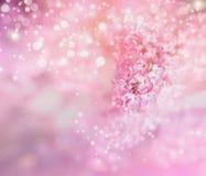 与淡紫色花和bokeh的浪漫花卉背景 免版税库存照片
