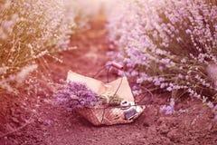 与淡紫色花束、老古色古香的照相机和球的篮子与麻线 在淡紫色领域之间行的淡紫色花  紫色色彩 免版税库存照片