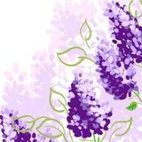 与淡紫色花的背景 免版税库存图片