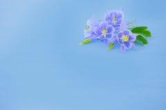 与淡紫色花的蓝色坚实背景 库存照片