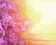 与淡紫色花花束的春天背景在一个木板的在金黄阳光下 库存图片