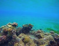 与深大海和五颜六色的珊瑚的水下的风景 免版税库存图片