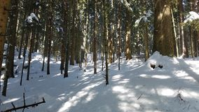与深蓝天的雪山 喀尔巴阡山脉,乌克兰,欧洲 在Mounta的木头 图库摄影