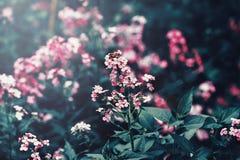 与深绿叶子的美丽的神仙的梦想的不可思议的红色桃红色花 免版税图库摄影