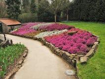 与混杂的石南花的五颜六色的花床 库存照片