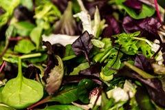 与混杂的绿色莴苣芝麻菜, mesclun, mache接近的健康食物绿色膳食的新鲜的沙拉 免版税图库摄影