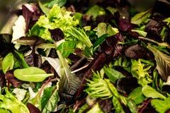 与混杂的绿色莴苣芝麻菜, mesclun, mache接近的健康食物绿色膳食的新鲜的沙拉 免版税库存图片