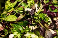 与混杂的绿色莴苣芝麻菜, mesclun, mache接近的健康食物绿色膳食的新鲜的沙拉 库存照片