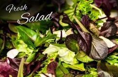 与混杂的绿色莴苣芝麻菜mesclun mache关闭的新沙拉文本健康食物膳食 免版税库存图片