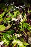 与混杂的绿色莴苣芝麻菜mesclun mache关闭的新沙拉文本健康食物膳食 库存照片