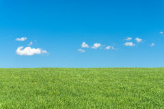 与清楚的蓝天和白色云彩的绿草领域 图库摄影
