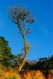 与清楚的蓝天的树 免版税库存照片