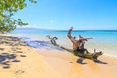 与渔船的加勒比海滩在Playa la Ensenada,多米尼克 图库摄影