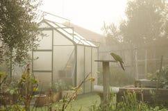 与温室和鹦鹉的神奇薄雾 图库摄影