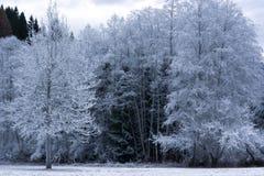 与温度的夜之前结冰的森林下降到16在零以下 免版税图库摄影