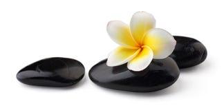 与温泉石头的赤素馨花 免版税库存图片