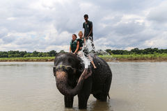 洗与游人和司机chitwan的,尼泊尔的大象澡 库存照片