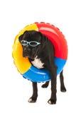 与游泳玩具的狗 免版税库存照片