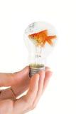 与游泳鱼的电灯泡 图库摄影