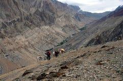 与游牧人的印度- Ladakh (一点西藏)风景 免版税图库摄影