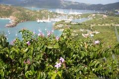 与游艇水池的紫色花在背景中 免版税库存照片
