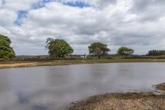 与湖、树和马的新的森林风景与车手 免版税库存照片