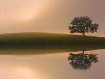与湖反射的梦想的偏僻的树 库存图片