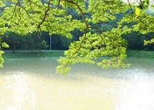 与湖和树的自然背景 库存图片