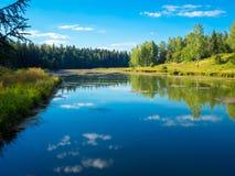 与湖和森林的俄国夏天风景 免版税库存照片