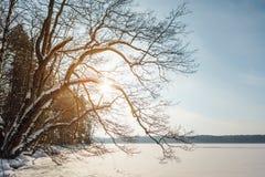 与湖和森林的冬天风景在斯堪的那维亚 免版税库存照片