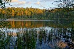 与湖和森林的秋天风景 库存照片