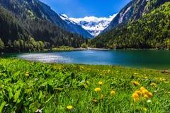 与湖和草甸的惊人的山风景在前景开花 Stillup湖,奥地利 免版税图库摄影