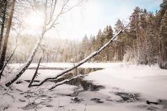 与湖的冬天风景 俄国 卡累利阿 免版税库存照片