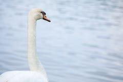 与湖的天鹅 免版税库存图片