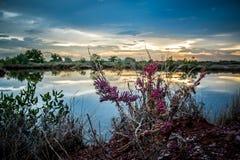 与湖的桃红色花 库存图片