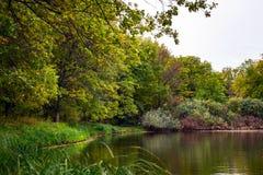 与湖的森林风景 库存照片