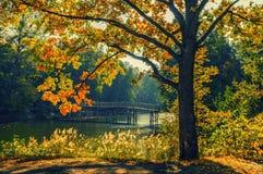 与湖的秋天风景 免版税库存照片