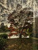 与湖的英国秋天,树和可看见的太阳发出光线- Uckfield,东萨塞克斯郡,英国 免版税库存照片
