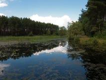 与湖的风景在夏日 免版税图库摄影